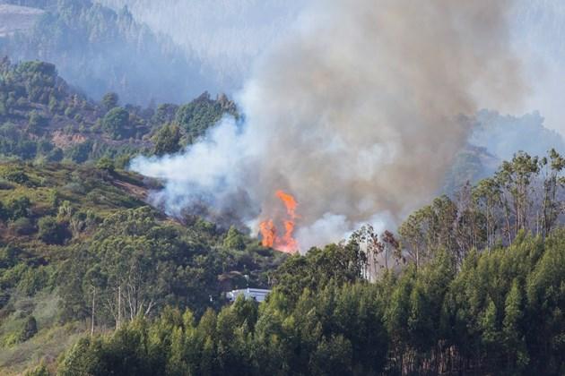Увеличава се площта на горските пожари на Канарските острови (Снимки)
