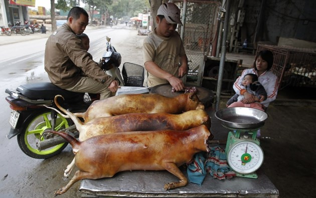 В Китай забраняват яденето на кучета и котки