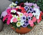 Важно за цветната градина сега