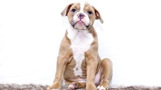 Кои са най-опасните кучета
