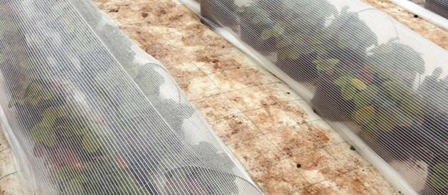 Биоклиматиченият екран намалява загубите на топлина