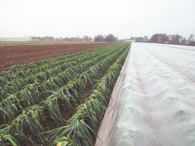 Покривалото-щит създава идеални условия за фотосинтеза