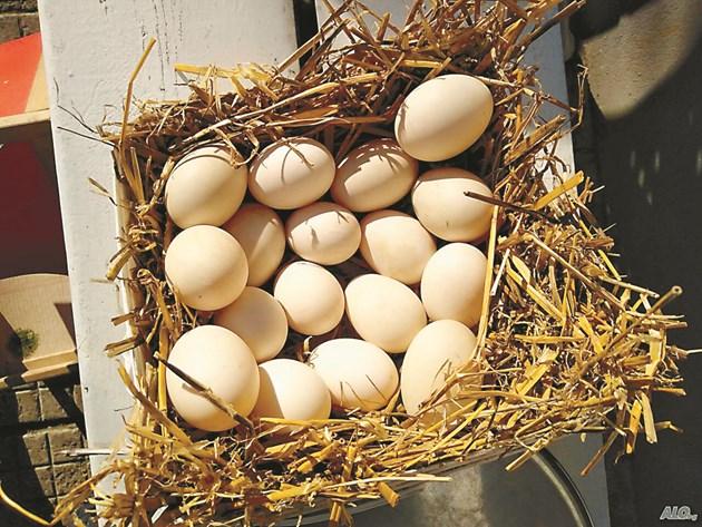 Черупките от яйца са полезни за растенията в двора