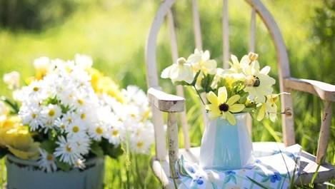 Флоротерапия, или как лекуват цветята