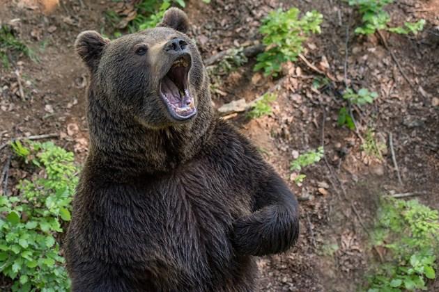 Стръвници нападат в Родопите
