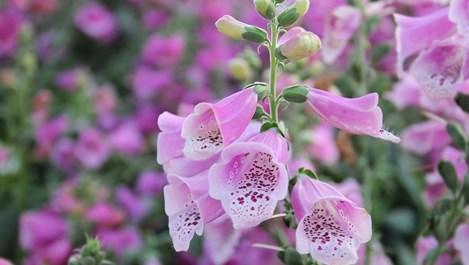 14 отровни растения, които отглеждаме у дома