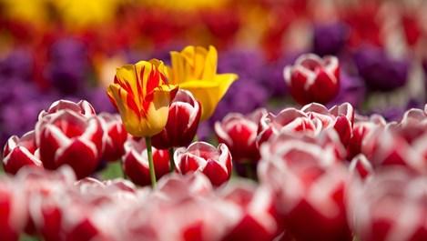Пролетно почистване за растенията