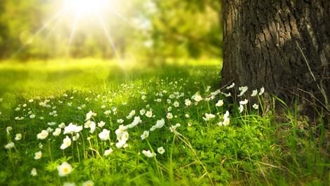 Лятното слънцестоене и неговите могъщи ползи