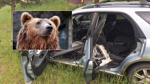 Мечка открадна кола и катастрофира (Снимки)