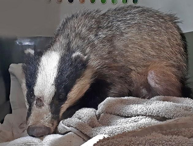 """Щастлива случайност помага на Борко да бъде прибран за лечение / Снимка: """"Дивите животни"""""""