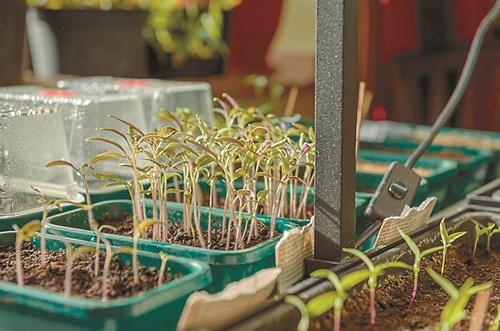 Обеззаразете почвата, гответе се за разсадите