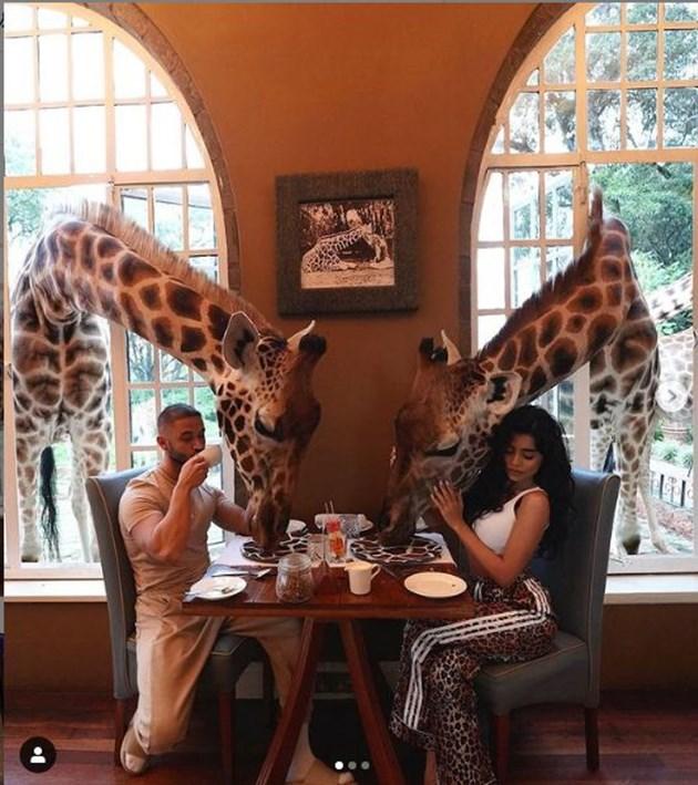 """Жирафите са готови да си """"откраднат"""" от закуската на двойката"""