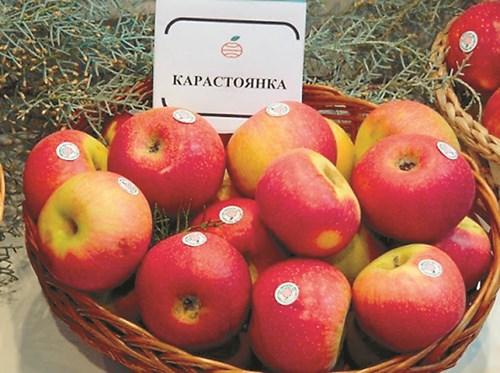 Карастоянка е чудесен български сорт