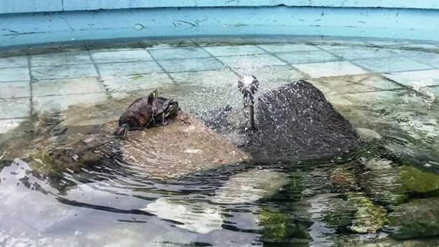 Ромчета изтезават костенурки