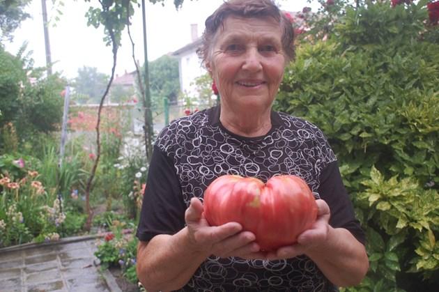 2 килограма домат отгледа баба Мария