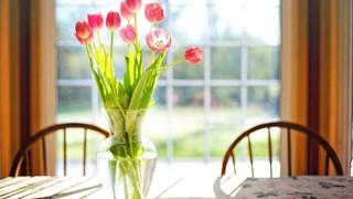 Цветя и зеленчуци, които се отглеждат в чаша вода
