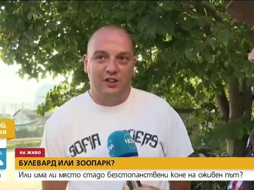 Глобиха собственик на коне, разхождащи се свободно в София (Видео)