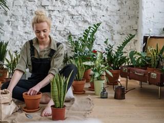 Ползи от отглеждането на растения вкъщи
