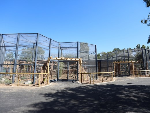 Маймуните се връщат в зоопарка, имат нов дом