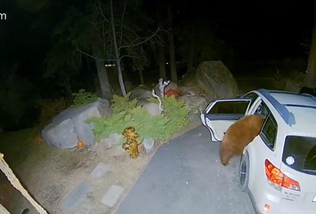 Мечка се промъкна в кола, за да поспи на задната седалка (Видео)