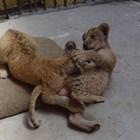 Косара и Симба преодоляха стреса