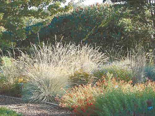 Още за декоративните треви