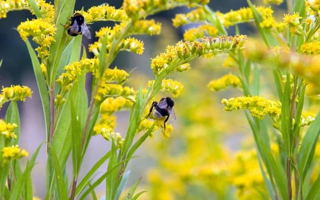 Проучване показва, че пчелите могат да служат като биоиндикатори за наблюдение на големи площи и да предоставят информация, от практическо значение, за по-доброто управление на околната среда.