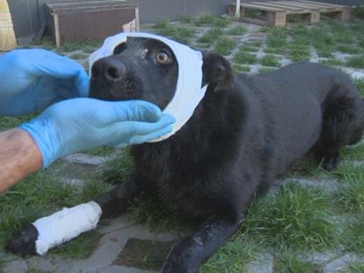 Стреляха от упор по бездомно куче в София
