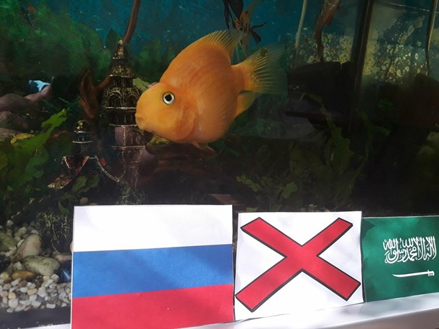 """Оракулите на """"България Днес"""": Русия ще бие на откриването"""