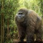 Два пъти по-високи от човека маймуни са живели на Земята преди 2 милиона години