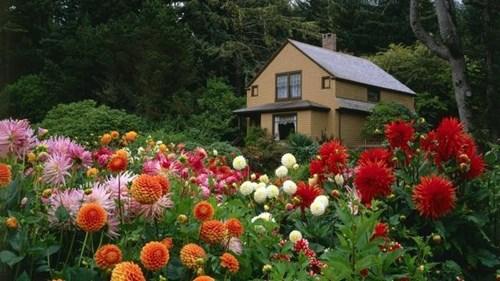 Цъфтяща градина през цялата година