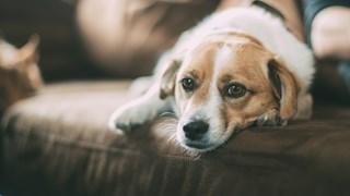 10 факта за кучетата, които вероятно не знаете