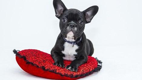 Проблеми със зрението при кучетата