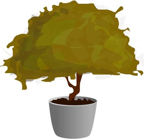 Искате дърво в саксия? Няма проблем!