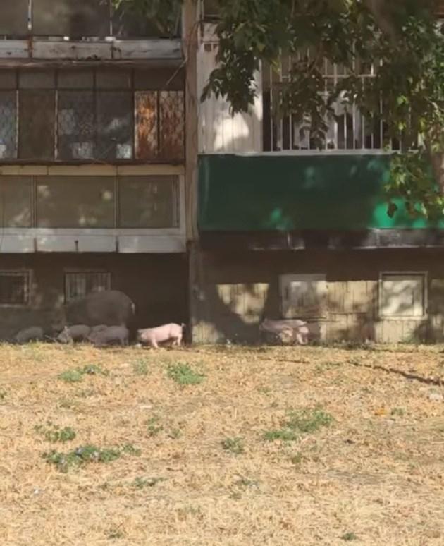 Животните обикалят покрай блоковете