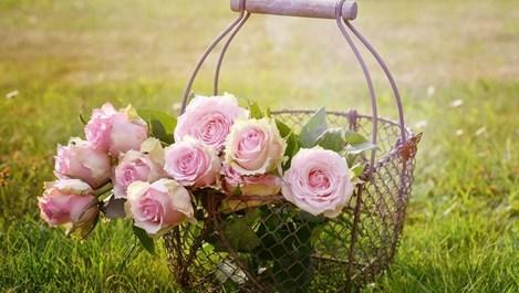 6 грешки при отглеждането на рози