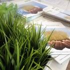 Собственици на земеделски земи продават имоти, за да посрещнат спешни разходи