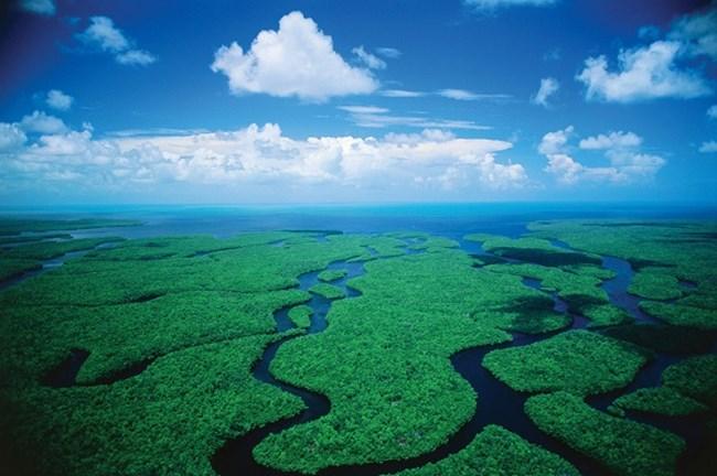 Национален парк Евърглейдс, Флорида СНИМКИ: ФЕЙСБУК/ИНСТАГРАМ