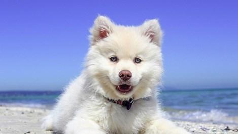 Кастрирай кучето си, ако го обичаш!
