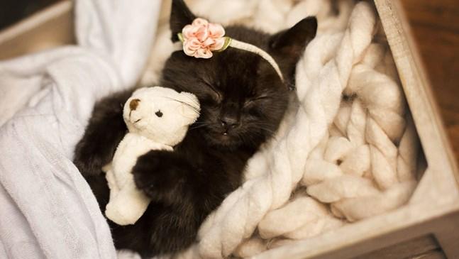 Майка направи фотосесия на новородено котенце, за да усмихне дъщеря си