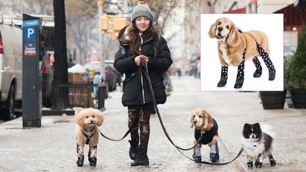 Чорапогащи за домашни кучета   (Снимки)
