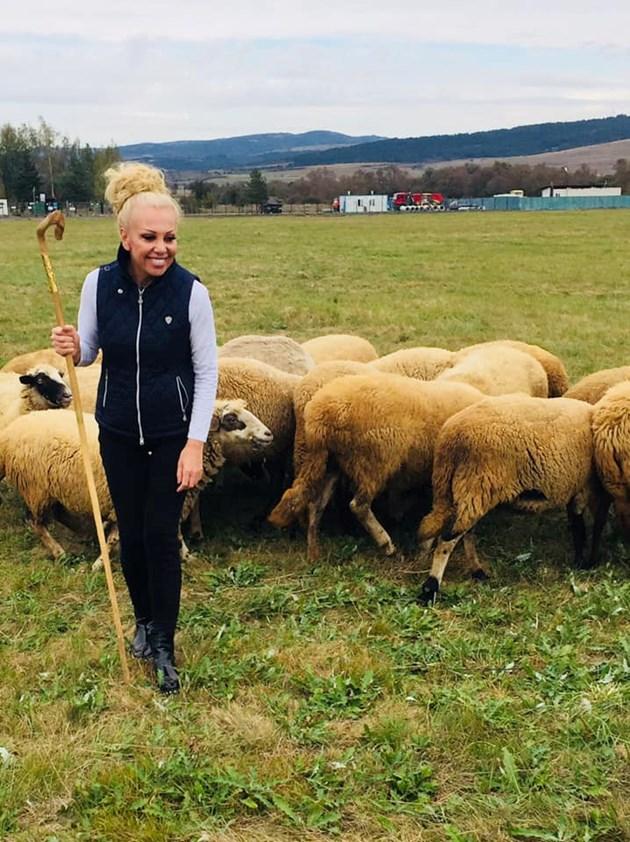 Луна пасе овцете