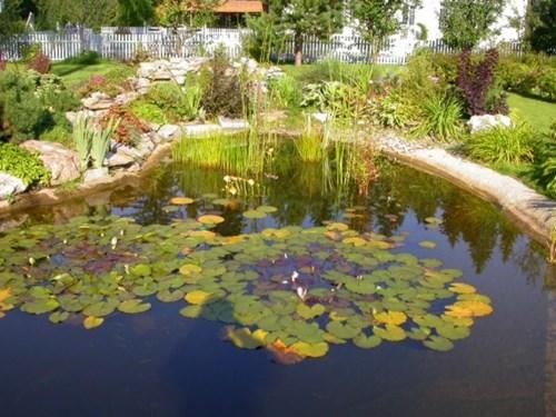 Как да оформите езерото в градината