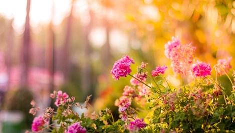 Какво да направим през юли, за да имаме най-красивите цветя