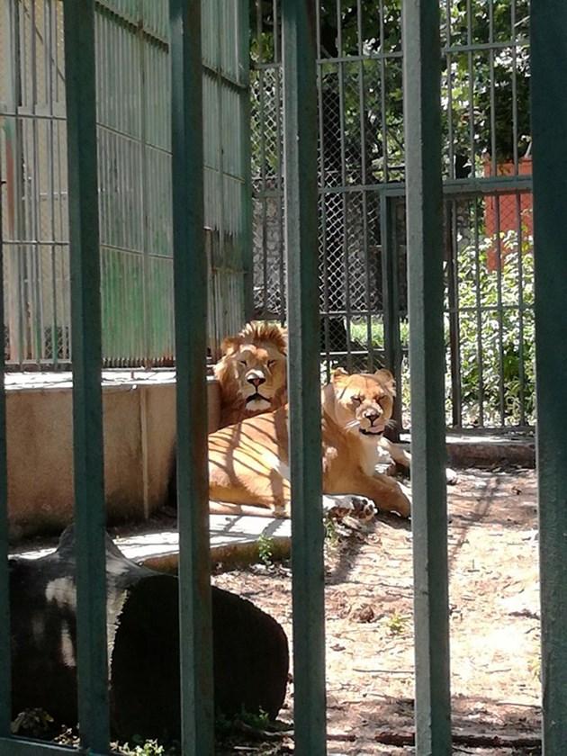 Животни изчезват от хасковския зоокът
