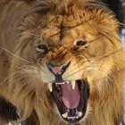 Лъвчето Терез отива на скенер