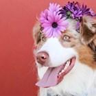Маскирани кучета дефилираха в Рио преди карнавала
