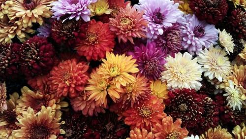 Най-красивите и лесни за отглеждане цветя през есента