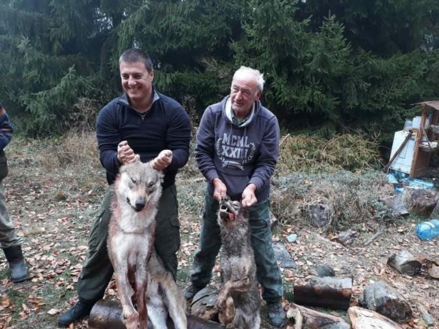 Разстрел за вълци, убийци на крави