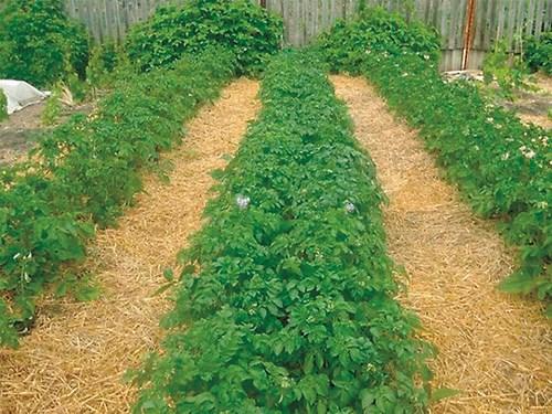 Безорно земеделие в личния двор